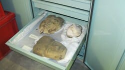 Bolton Museum Egyptology Drawers