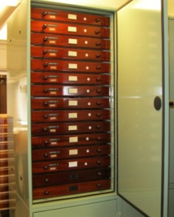entomology cabinets fitted to house the large entomology collection
